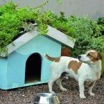 DIY: Dog Kennel
