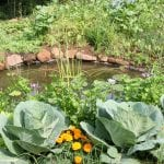 Companion Planting for Pest Control