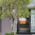 Designer trees for small spaces