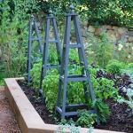 Top 10 tips to start a food garden