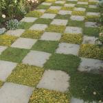 Paving plants