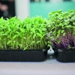 Van groenbemesting tot Mikrogroente