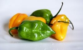 Summer heat with chillies