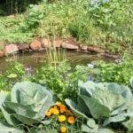Companion Planting for Pest Control