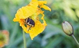 Summer pests and diseases