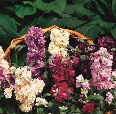 ... Hooked On The Pleasure Of Picking Your Own Grown Veggies And Herbs, Why  Not Extend That To Cut Flowers That Will Fill Your Home With Colour In  Winter?