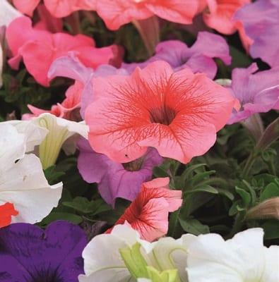 Food Garden Flowers