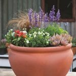 Colourful Herbs