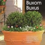 Buxom Buxus