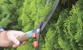 Pruning hedges and topiaries