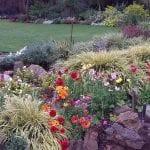 November Open Gardens