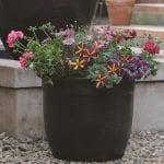 Pelargonium Pots