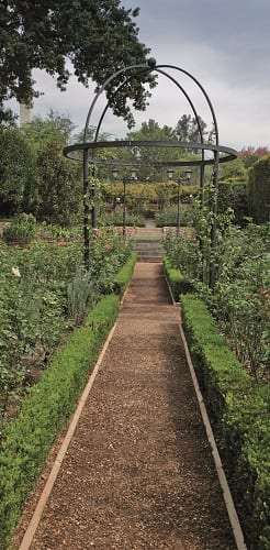 low hedge