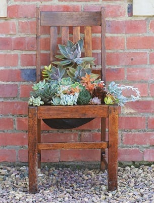 Succulent seat