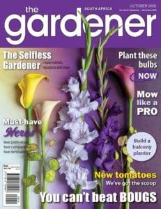 TG Mag