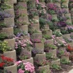 retaining wall plants