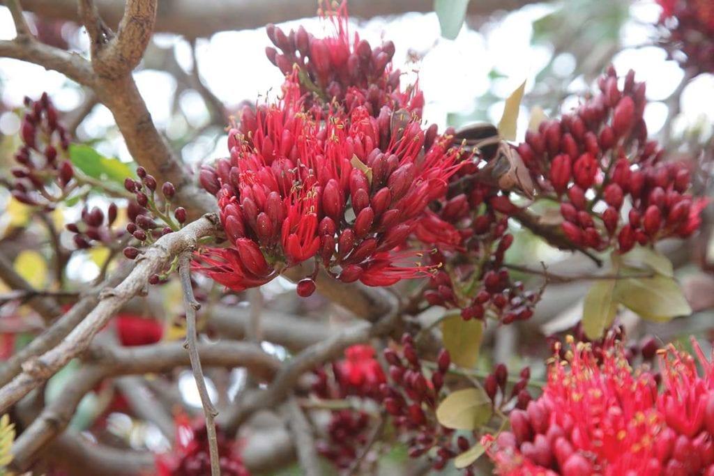 kleur plantpalette