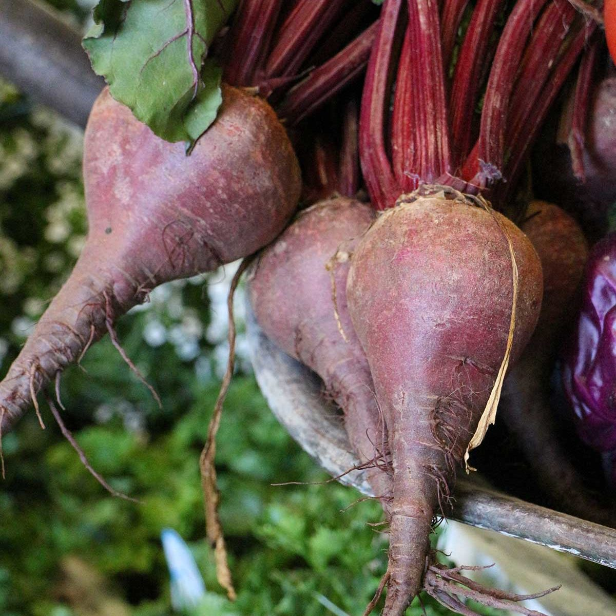 beetroot cut and come again