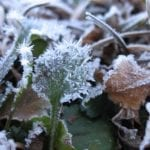 fighting frost