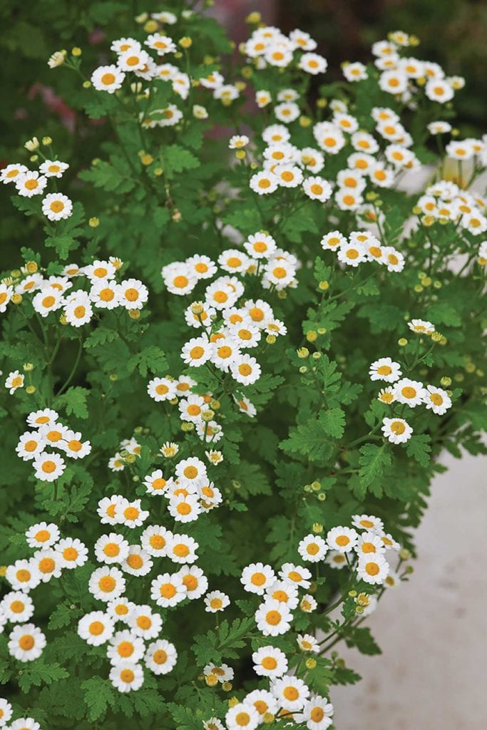 flowers for the veggie garden