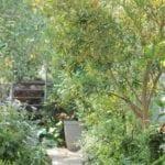 mini woodland