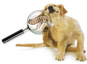 Pets-fleas.jpg