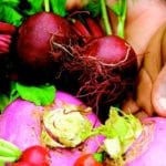 Savour your roots