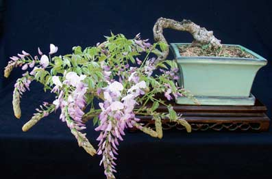 flower-bonsai.jpg