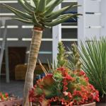 Container Plants that Beat the Heat