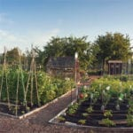 Selecting a site for a food garden