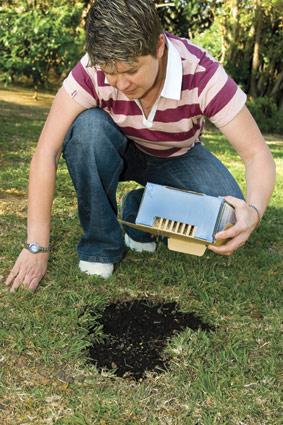 lawn-seed-starke-ayres-2.jpg