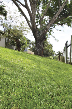 lawn-seed.jpg