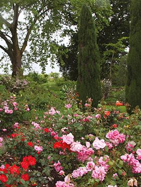 rose-garden1.jpg